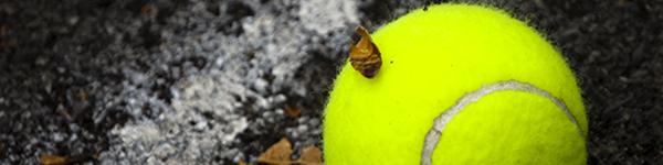 contacto-campamento verano tenis